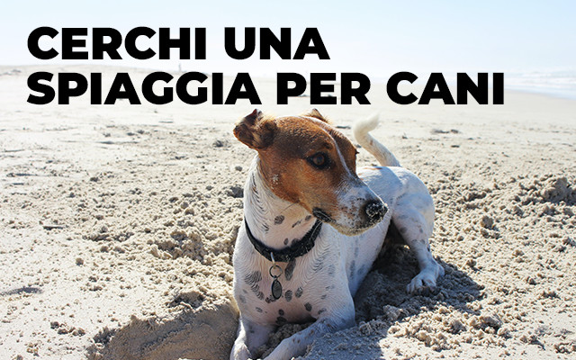 bagno riviera 1 rimini rivabella - spiaggia per cani